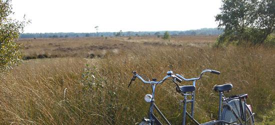 Tandem bike, field.